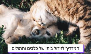 המדריך לגידול ביתי של כלבים וחתולים